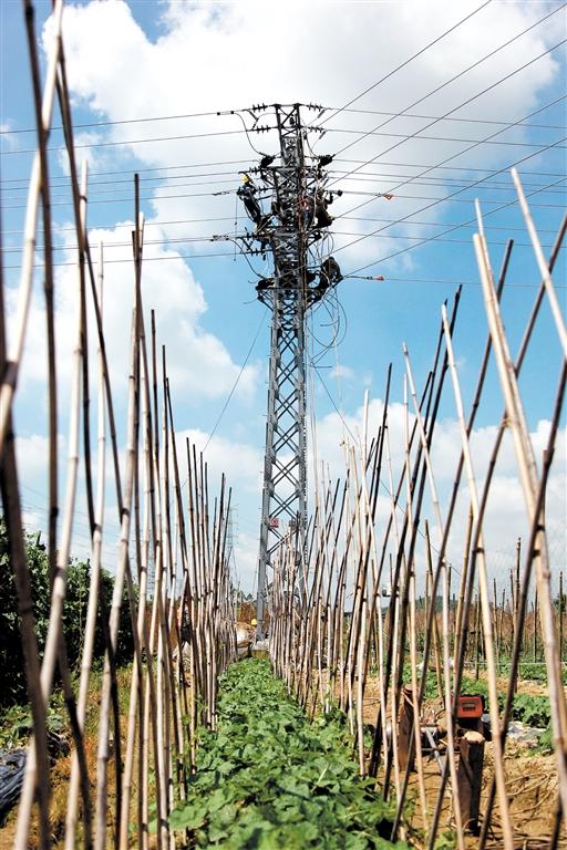 12bet娱乐城供电局工作人员进行大范围线路负荷割接,为乡村工农业发展增添动力。