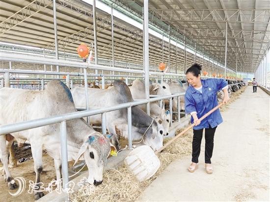 贫困户秦会春到甘牛集团工作一年多,每月能挣3000多元。