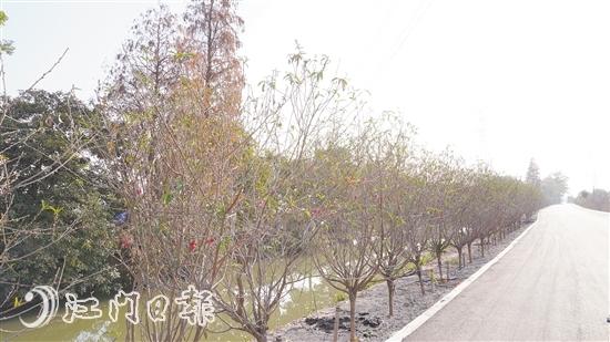 向东村超53公顷桃花即将盛放,政府多渠道助花农售花 约吗?我在桃花路等你