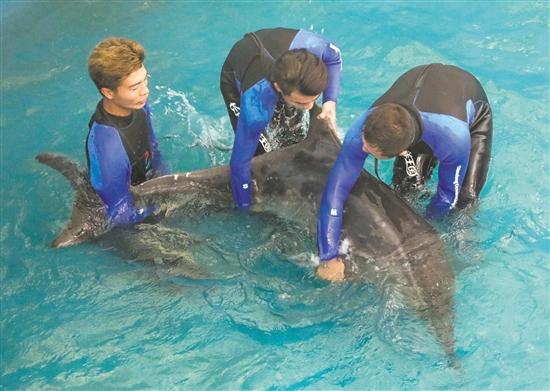"""7月20日,动物救援人员准备将""""江江""""从康复池捞起,用专门设计的担架运往码头。"""